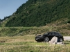 AEZ Panama Porsche Cayenne_Imagepic05